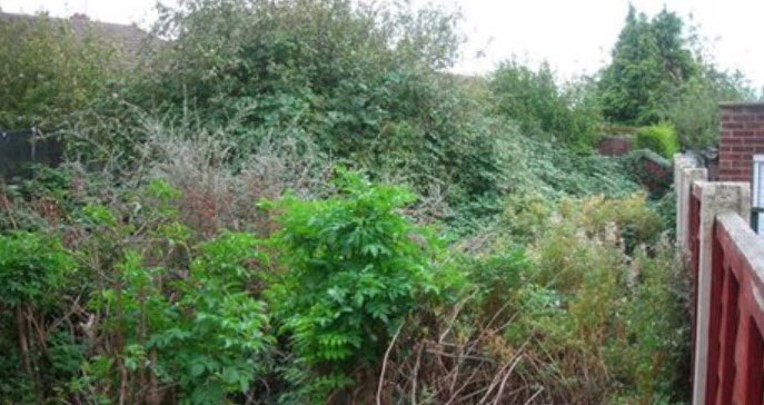 Garden clearance in Redditch Worcestershire uk