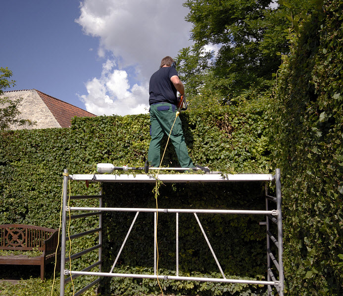 Hedge Cutting in Redditch Worcestershire UK